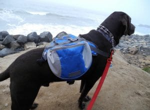 Lifeunion Saddle Dog Backpack