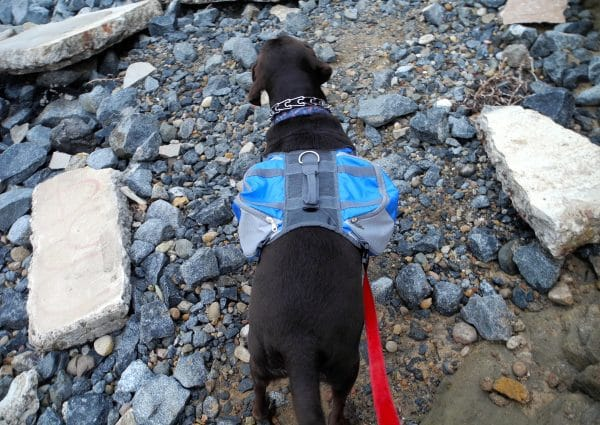 Lifeunion Saddle Dog Bag Review